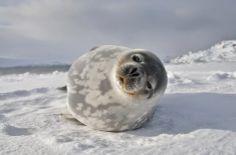 AnormaL STYLE: Życie na Antarktyce Whale, Animals, Whales, Animales, Animaux, Animal, Animais