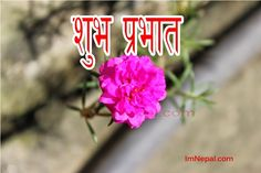 best essay on nepal tourism year 2011