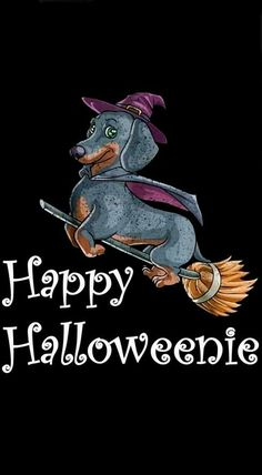 The Dachshund Dogs Size Funny Dachshund, Mini Dachshund, Dachshund Puppies, Weenie Dogs, Daschund, Doggies, Happy Halloweenie, Halloween Pictures, Puppy Love