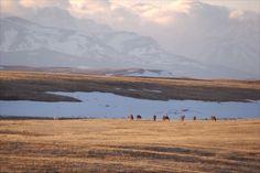 On Blackfeet Nation, GlacierNP