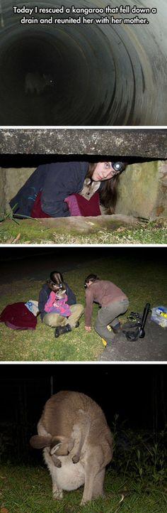 Baby kangaroo rescue!! I love it