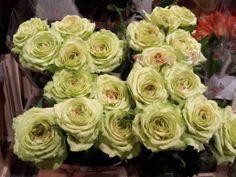 #Rose # Kyomi Availalbe at www.barendsen.nl