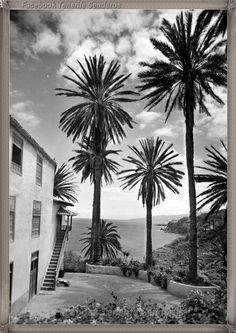120 Ideas De Fotos Antiguas De Las Islas Canarias Islas Canarias Fotos Antiguas Islas