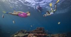Explore our underwater world