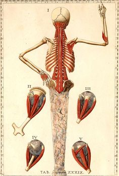 Romanae archetypae tabulae anatomicae novis  [https://pinterest.com/pin/287386019942635678] by Bartolomeo Eustachi (anatomist: http://www.pinterest.com/pin/287386019944076869/) and Giulio de'Musi (artist).