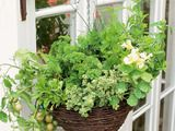 Hanging Basket Garden Provides Tasty Produce