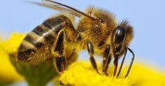 Vlinders, bijen, lieveheersbeestjes en allerlei andere nuttige insecten zoeken hun voedsel in bloemen.