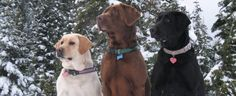 Top Dog Breeds of 2014 - What are the Most Popular Dogs