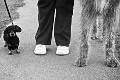 60 Trendy dogs black and white photography elliott erwitt Elliott Erwitt Photography, Dog Leg, Documentary Photographers, Animal Photography, Photography Tips, Street Photography, Black N White, Whippet, Dog Photos