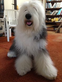 """He shall be my fluffy buddy and I shall call him """"George."""""""