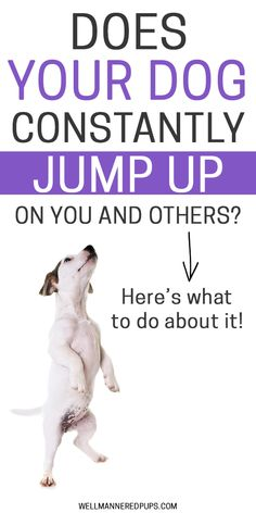Military Dog Training Tips to stop your dog from jumping up on you and others.Military Dog Training Tips to stop your dog from jumping up on you and others Jumping Dog, Best Dog Training, Potty Training, Husky Training, Toilet Training, Easiest Dogs To Train, Dog Training Techniques, Dog Care Tips, Pet Tips