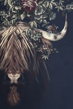 Highlander 2 by Poster Junkie Highland Cow Painting, Highland Cow Art, Scottish Highland Cow, Cavalo Wallpaper, Cow Wallpaper, Western Photography, Animal Photography, Fluffy Cows, Canvas Wall Art