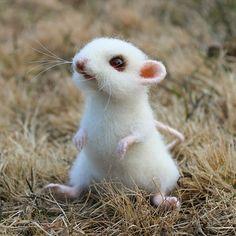 Белая мышка Норочка.  Очень давно уже хотелось сделать именно белую мышку, и вот- прошу любить и жаловать ❤ Мышка в резерве. #белаямышь #мышка #мышь #сухоеваляние #сувенирручнойработы #авторскиеигрушки #игрушкиизшерсти #игрушкиручнойработы #maus #animals #feltingwool Needle Felted Animals, Felt Animals, Cute Baby Animals, Needle Felting, Animals And Pets, Felt Mouse, Wool Art, Cute Mouse, Cute Animal Drawings