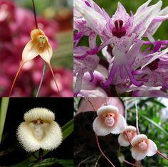 orquídeas raras que se parecem com animais