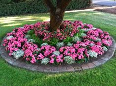 others creating enchanting focal points for gardens by making circular colorful flower bed enchanted flower bed around the tree with pretty pink and - Flower Garden Ideas Around Tree