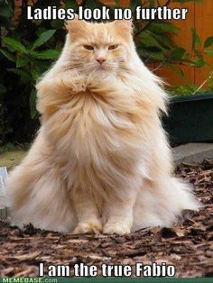 the true Fabio   happy cats  healthy cats :)))  Ihana turkki !