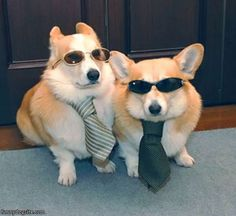 Cool Dressed Up Dogs
