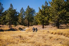 Party Time on Mount Pinos in the Los Padres National Forest | The Radavist