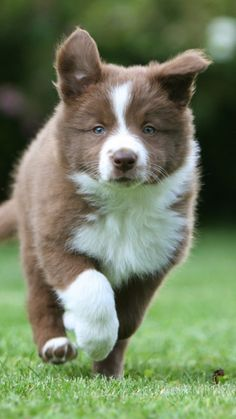 cute DOG  #puppy #dogs #puppies