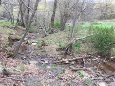Hunter's Haven in Lake Ariel Land Real Estate for Sale at Adams Rd $88,000Hunters Welcome! 26 acre parcel of consistently successful hunting land in Hamlin w...