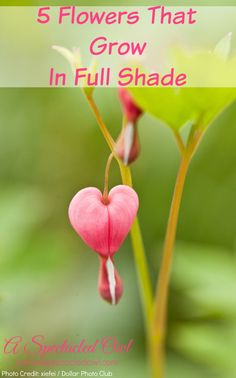 Five Flowers That Grow In Full Shade - Read about impatiens, torenia, 'Concord Grape' spiderwort (Tradescantia), primrose, and bleeding heart. #shade