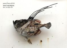 Driftwood Sculpture, Fish Sculpture, Driftwood Art, Wood Animal, Junk Art, Fish Design, Animal Faces, Fish Art, Metal Crafts