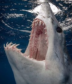 Mako Shark https://www.rebelmouse.com/BestDripCoffeeMaker2013/