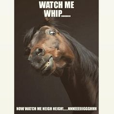 Horse Puns - funniest memes in the Stud Horse puns are best for horse lovers and for those who like horses, jokes, memes, funny pictures and puns. Just check this funny gallery. Horse Puns, Funny Horse Memes, Funny Horse Pictures, Funny Horses, Cute Horses, Funny Animal Memes, Horse Love, Horse Humor, Funny Memes