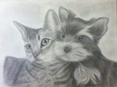 Yorkie and cat graphite drawing