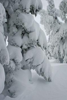 Cum ar trebui să arata iarna (sau măcar o parte din ea). Magic Snow, Winter Magic, Winter Storm, I Love Snow, I Love Winter, Winter Scenery, Snow Scenes, Winter Beauty, Winter Pictures