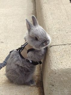 Adorable! I need to get a leash for my rabbit. :-)