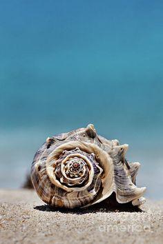 Seashell by Seashore by Evgeniya Lystsova