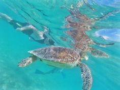 Snorkeling With Turtles in Akumal, Mexico