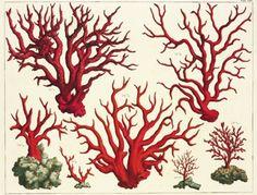 Cabinet Of Natural Curiosities | Le Cabinet des curiosités naturelles dAlbertus…