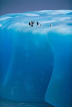 Penguins on Ice Shelf | #Information #Informative #Photography