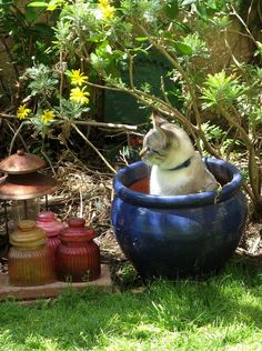 It's spring ... I've put the right seeds and ... got a kitty ! :-)