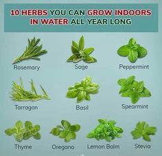 10 Herbs that Grow in Water All Year Long - Ashok Sharma (@iamashokji) | Twitter