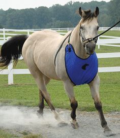 Help keep your horse cool during the hottest summer months: The Equine Koozie cooling vest from Hobby Hill Farm uses three-layer Hydroweave technology to transfer heat away from your horse's vital