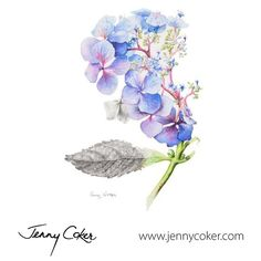Wild Blue Hydrangea | Watercolour Botanical | Original Artwork |