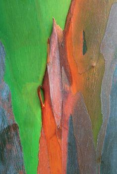 ecorce arbre 05 Lécorce des arbres  photo photographie