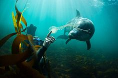 freediver, jellyfish and dolphin