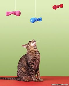 Sock Catnip Fish Toy - We love our pets and this super easy DIY gift idea.