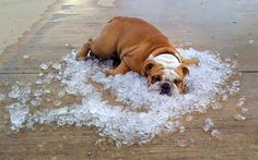 how to beat the heat :p