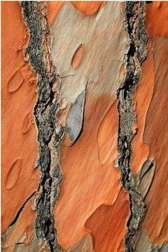 Earthshine-tree bark