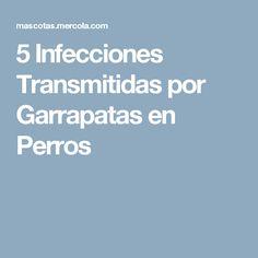 5 Infecciones Transmitidas por Garrapatas en Perros