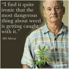 """I find it quite ironic that the most dangerous thing about weed is getting caught with it."" Bill Murray"