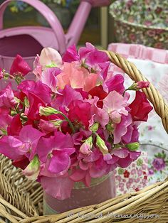 Pink Sweet Peas in a Basket. Image by Ingrid Henningsson at Of Spring and Summer