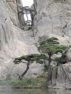 Joshua Tree