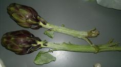 artichokes karczochy carciofi