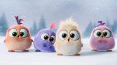 Cute Angry Bird Wallpaper Hd Pics Widescreen The Birds Moviewallpaper For Laptop. Cute Angry Bird Wallpaper Bomb red chuck angry birds hd photos cute bird wallpaper for computer full pics. Bird Wallpaper, Disney Wallpaper, Cartoon Wallpaper, Animals And Pets, Cute Animals, The Mindy Project, Secret Life Of Pets, Smosh, Cute Birds